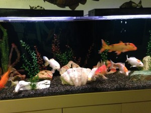 One of the two fish tanks!